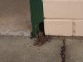 Issue: Termite damage