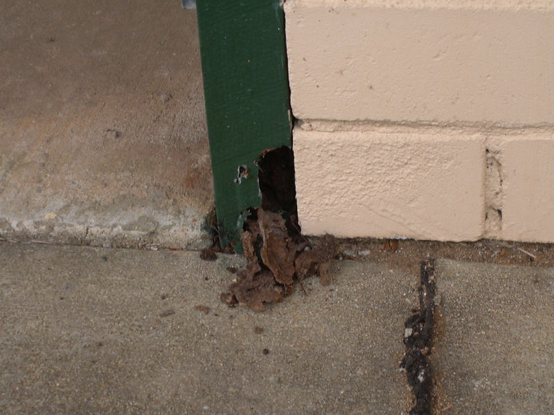 Issue: Termite damage