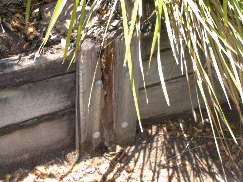 Issue: Timber in contact with ground with Termite damage