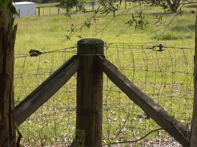 Issue: Termite damaged fence posts
