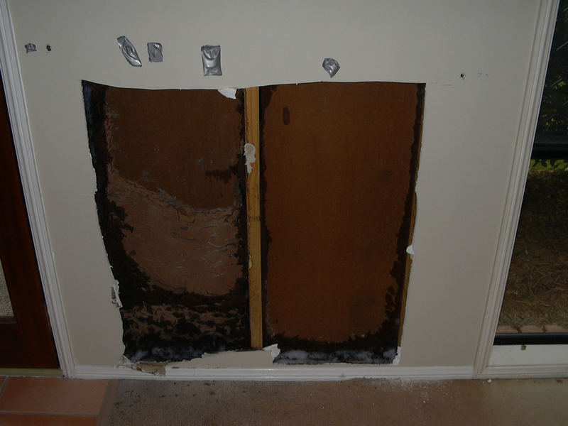 Termite workings in wall cavity