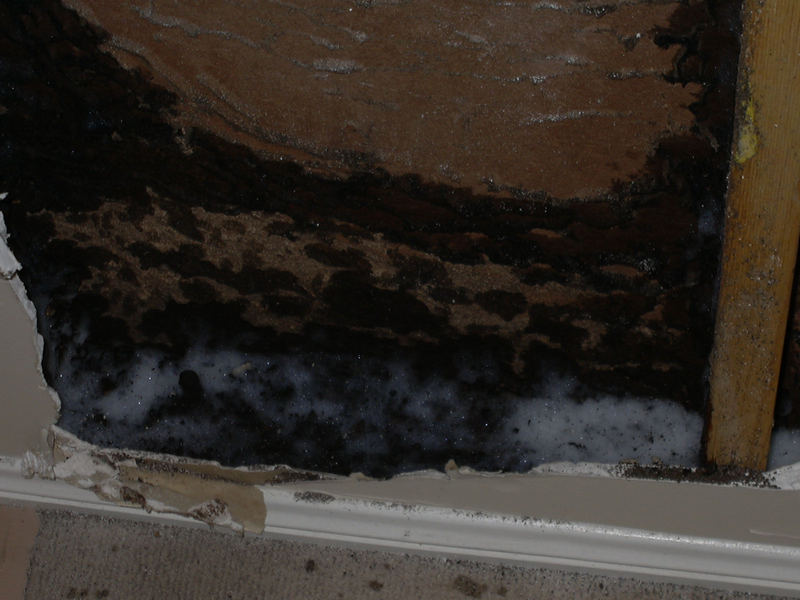 Termite Foam Treatment