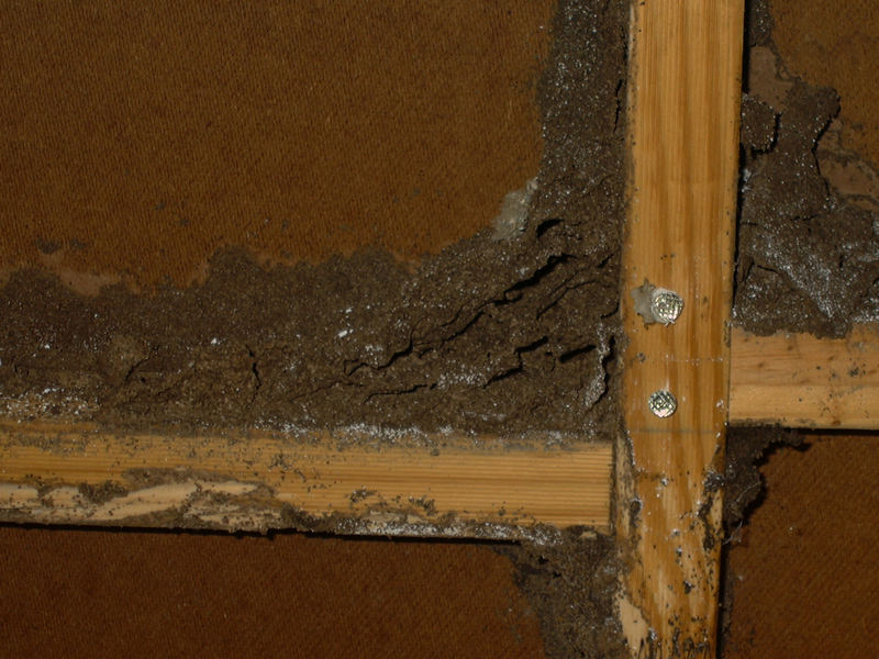 Termite workings
