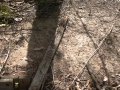 Issue: Termite damaged timber lying in yard
