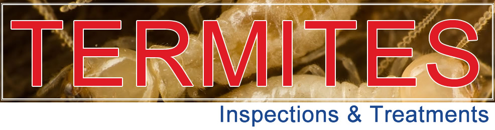 Termite Inspection caboolture