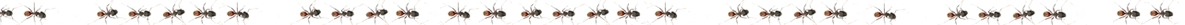 North Lakes Pest Control and Termite Control